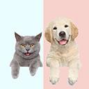 狗猫语翻译器 · 人猫交流器手机版